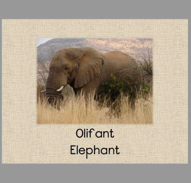 Gr 2 FAL English & EAT Afrikaans: Wild Animals